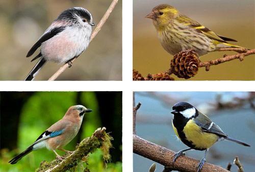 birds of killarney national park