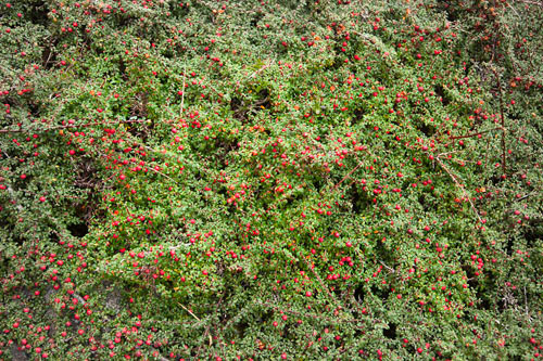 devils-island killarney national park