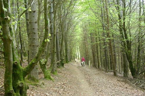 glanageenty walk