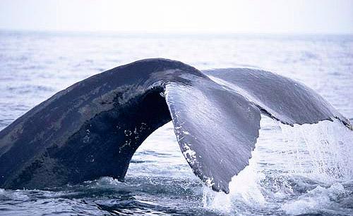 Dingle Peninsula Eco Marine Tours