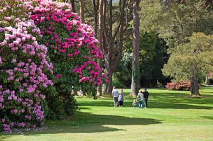 muckross-gardens-walk