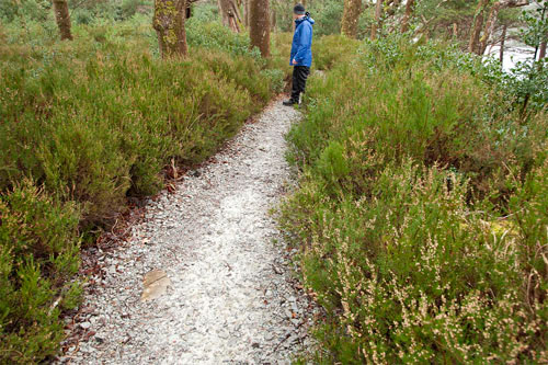 walk muckross
