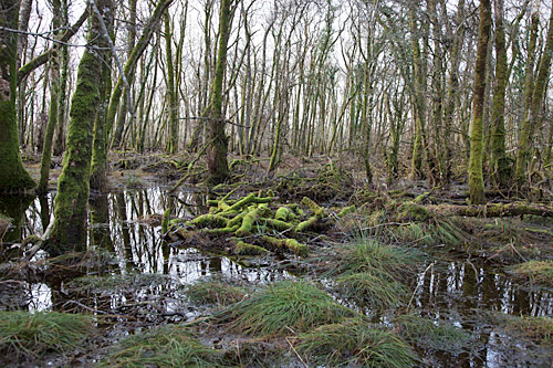 wet woodland killarney national park