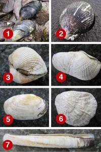 Seashells Dingle Kerry