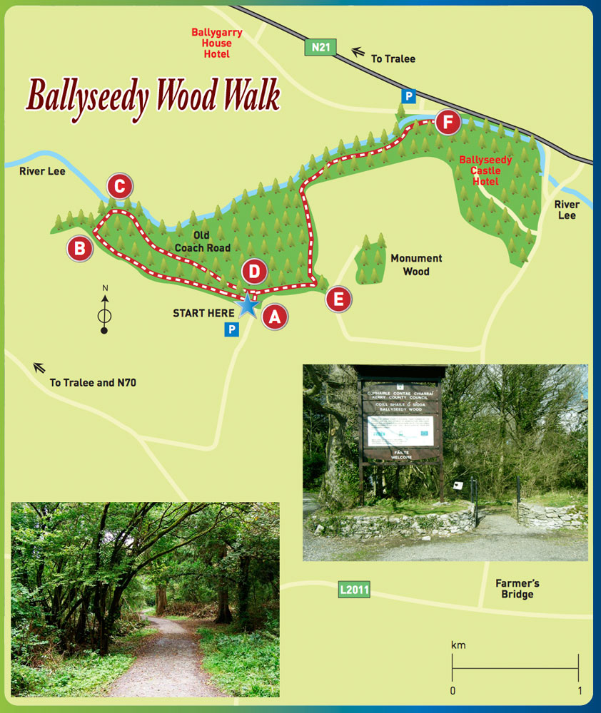 Kerry Gems Ballyseedy Wood Walk Is A Tranquil And Easy